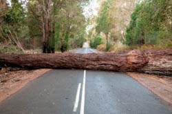 Following a storm, a large tree trunk blocking access on a road in Western Australia.